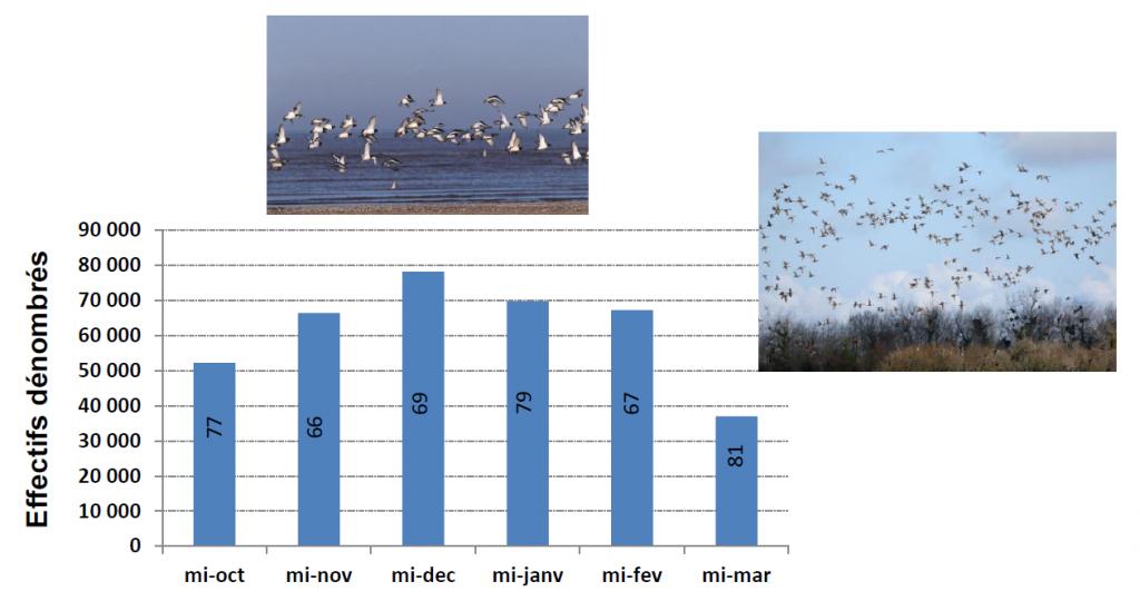 Effectifs totaux dénombrés au 15 de chaque mois dans les 55 sites en zones humides du réseau ISNEA