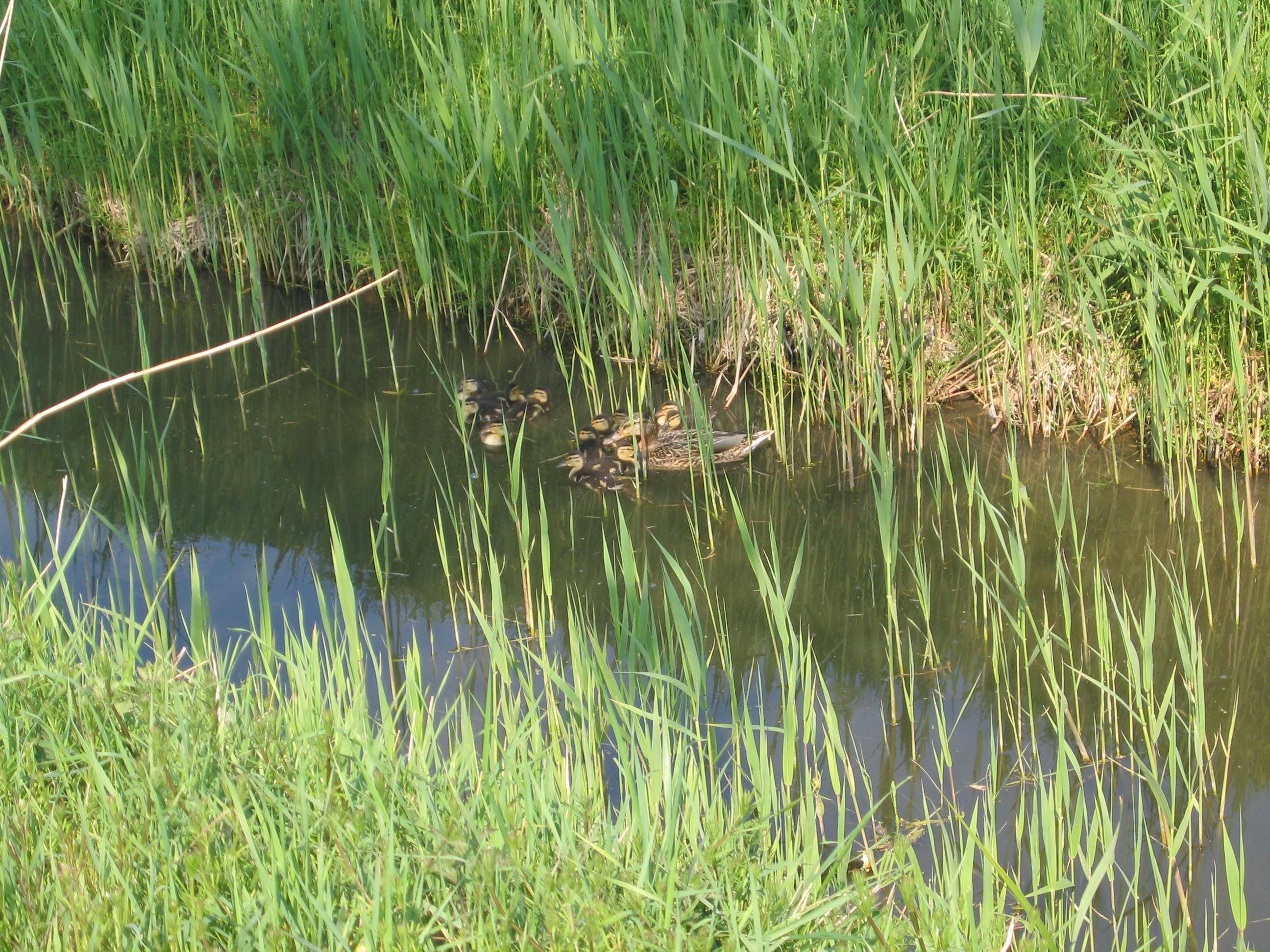 Nichée dans Canal Lacour