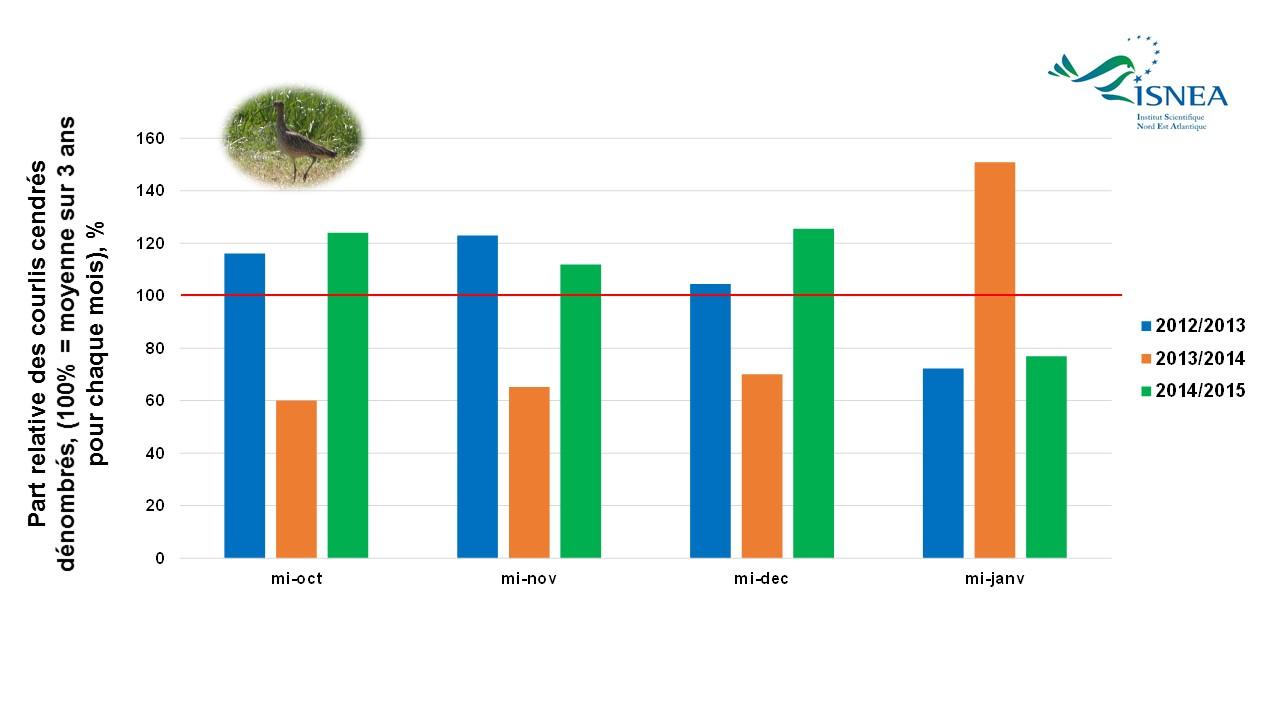 Le courlis cendré : un sujet d'étude important pour l'ISNEA