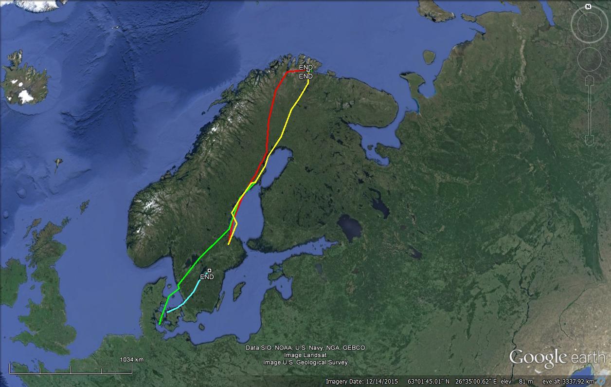Retour des oies cendrées dans le Nord de l'Europe.