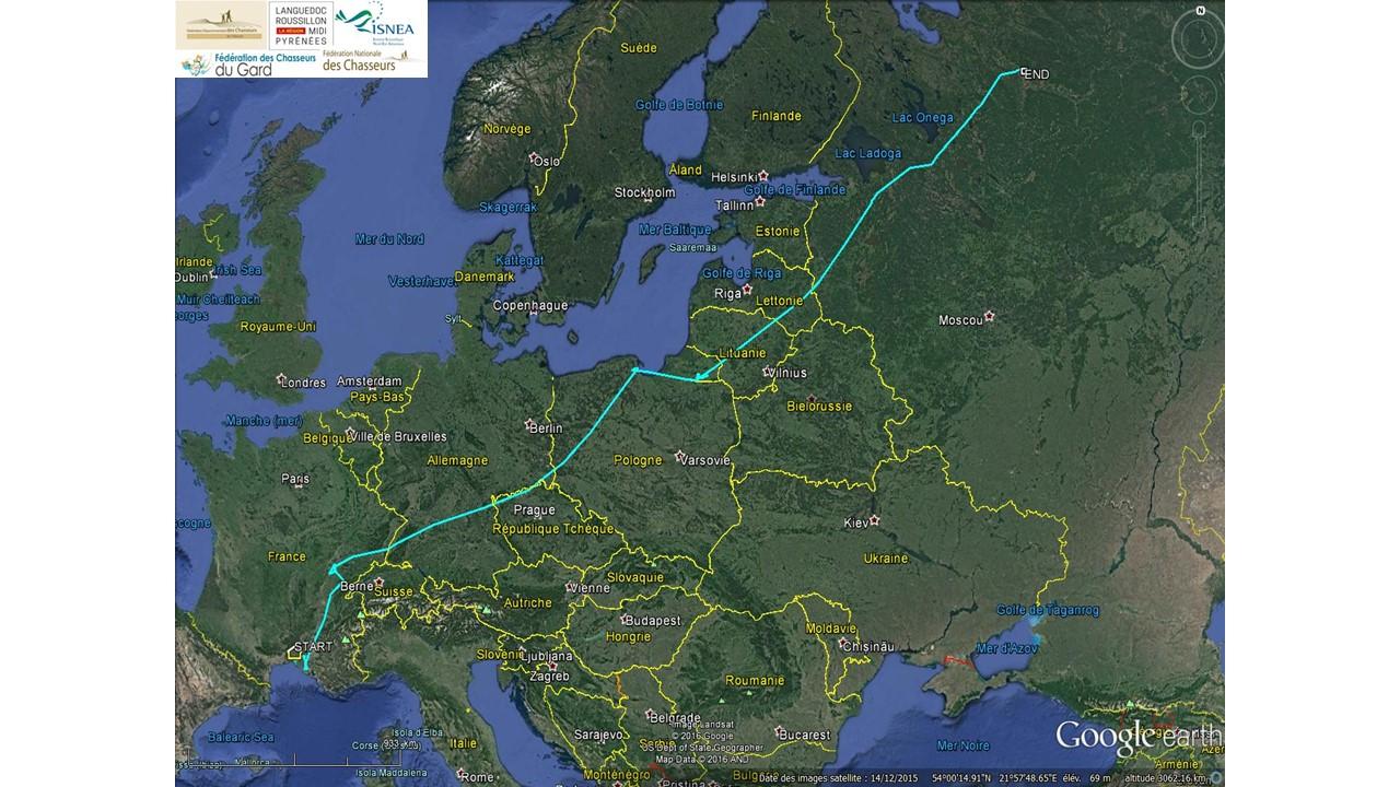 Le suivi par géolocalisation des sarcelles d'hiver : un défi prometteur !