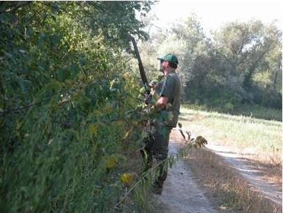 Comment tuer plus d'oies à la chasse : un article scientifique qui apporterait une solution ?