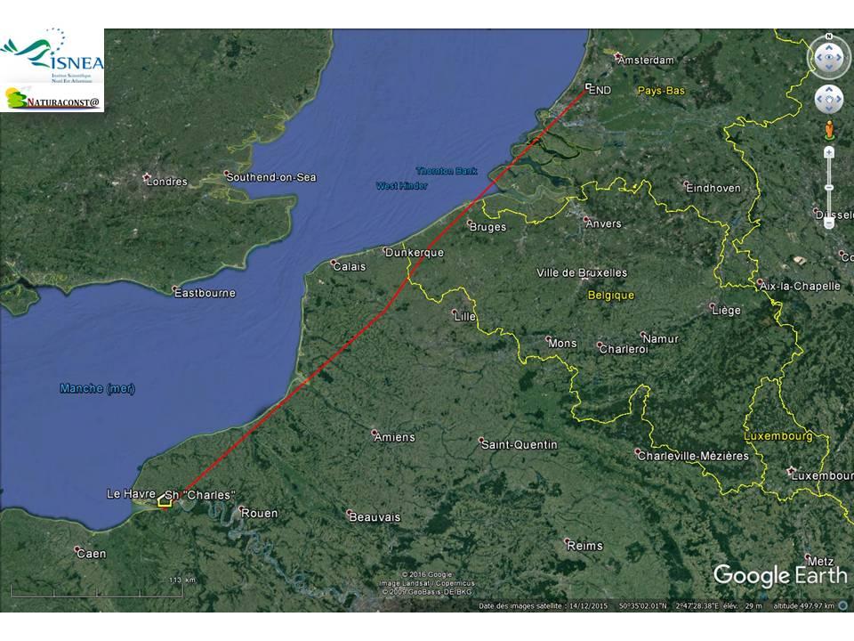 Une autre sarcelle de Baie de Seine aux Pays-Bas