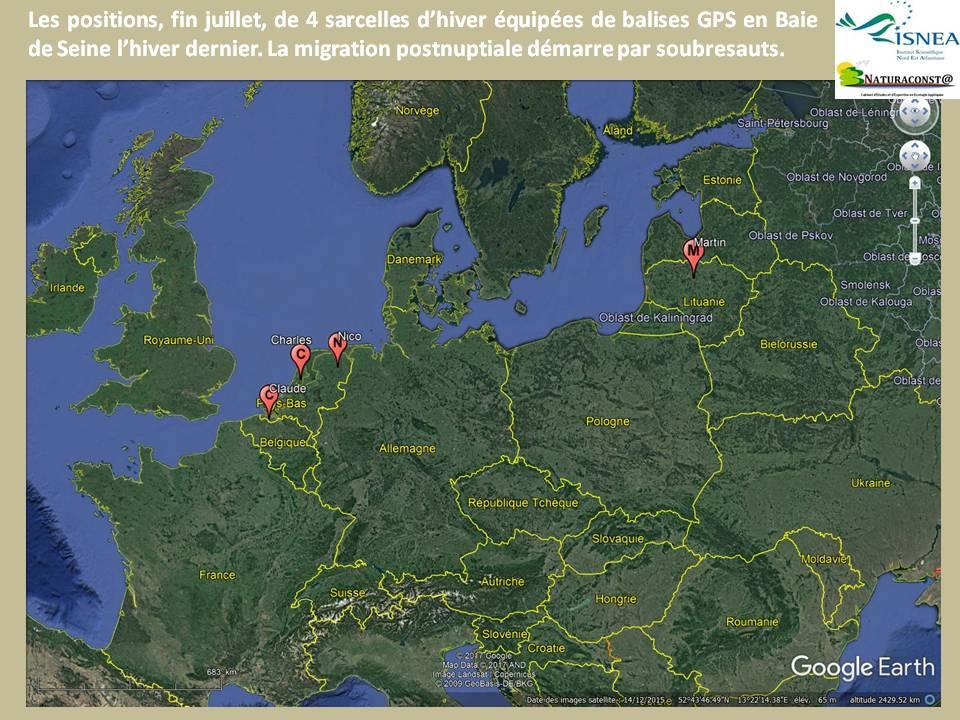 Les positions récentes de 4 sarcelles d'hiver équipées de balises GPS.