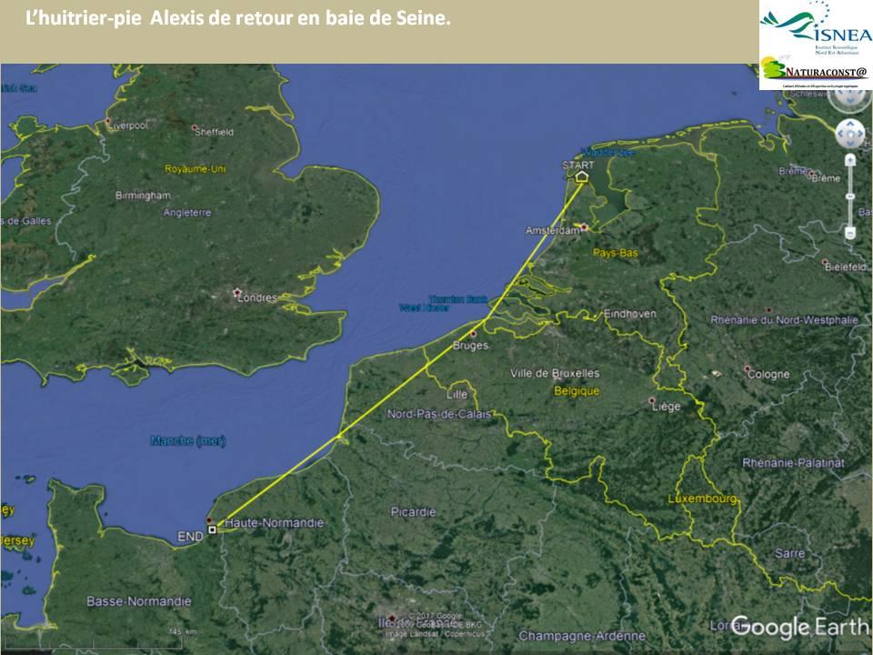 Après le retour du courlis «Romu» début juillet, voici le tour de l'huitrier-pie «Alexis».