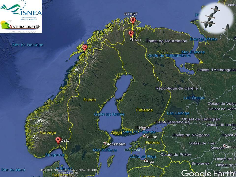 Un départ plus tardif des oies norvégiennes