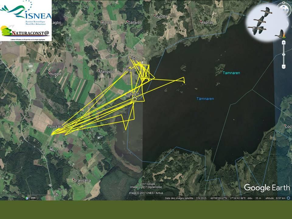 Zoom sur les déplacements locaux d'oies cendrées (partie 1)