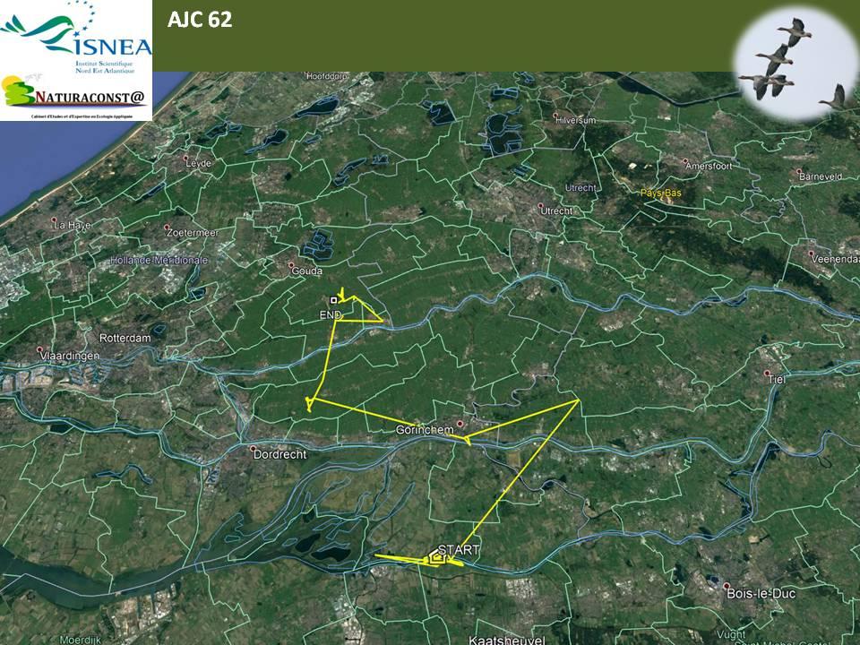 Positions en janvier 2018 de l'oie cendrée AJC62